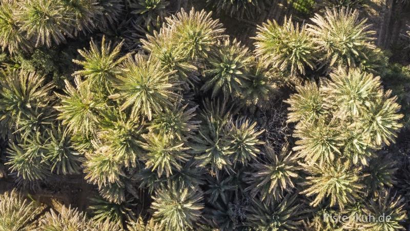 marokko-luftbild-palmen-oase