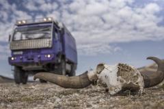 mongolei-yak-schaedel