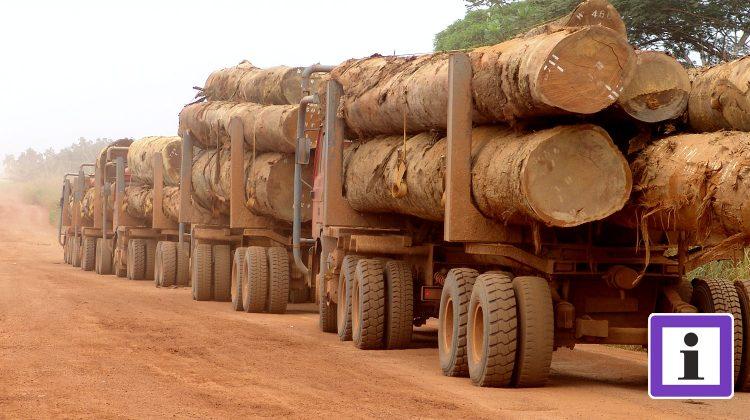 Holztransport in Kongo
