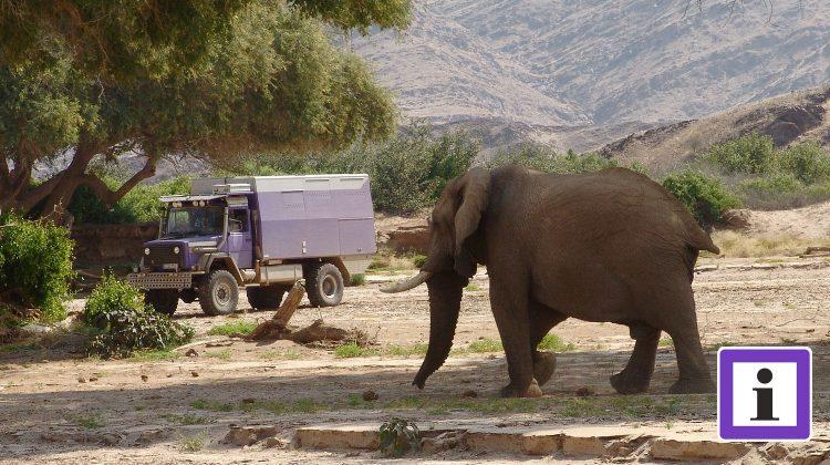 Wüstenelefant Namibia