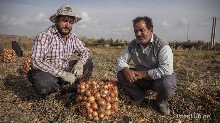 Türkische Bauern