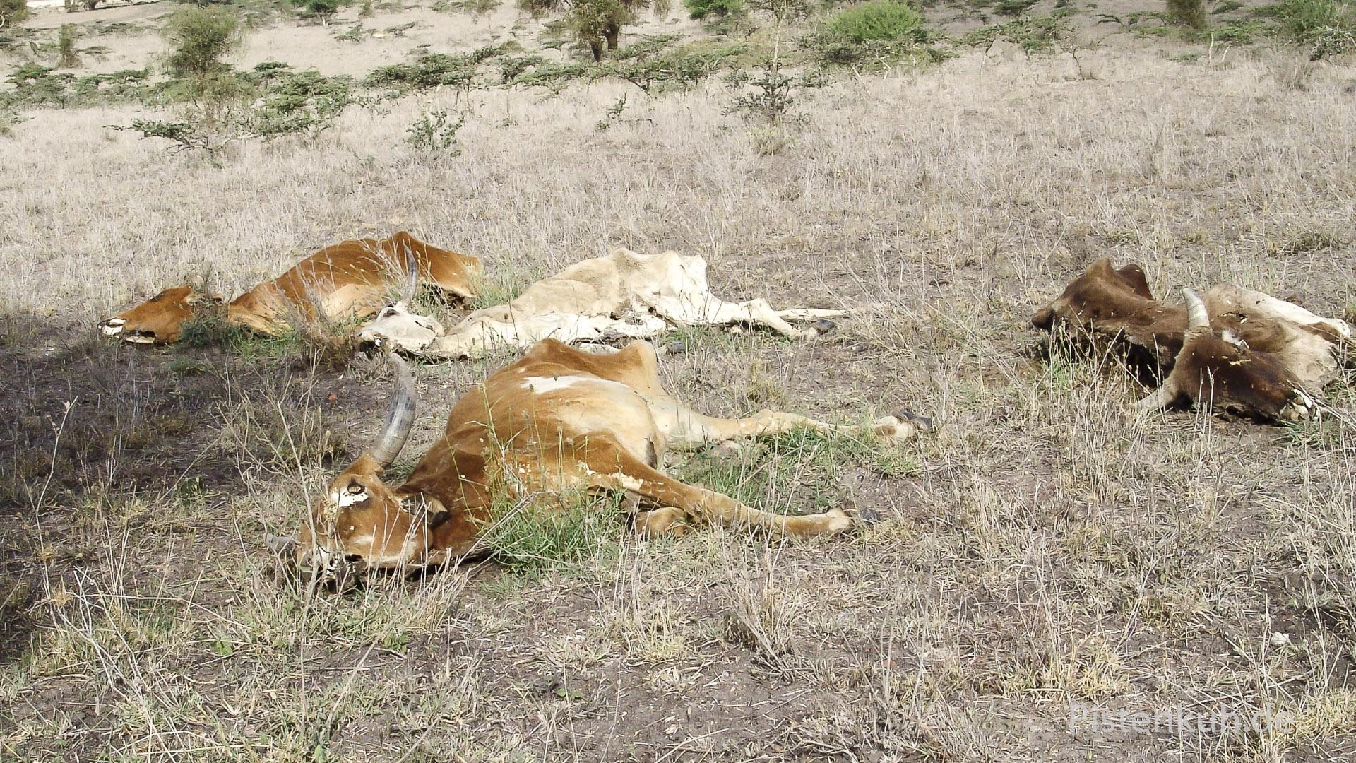 Dürrre in Ostafrika