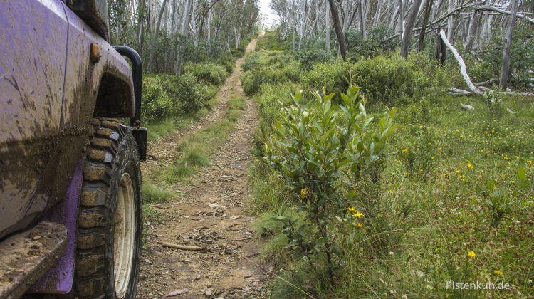einsame Offroad-Waldstrecke