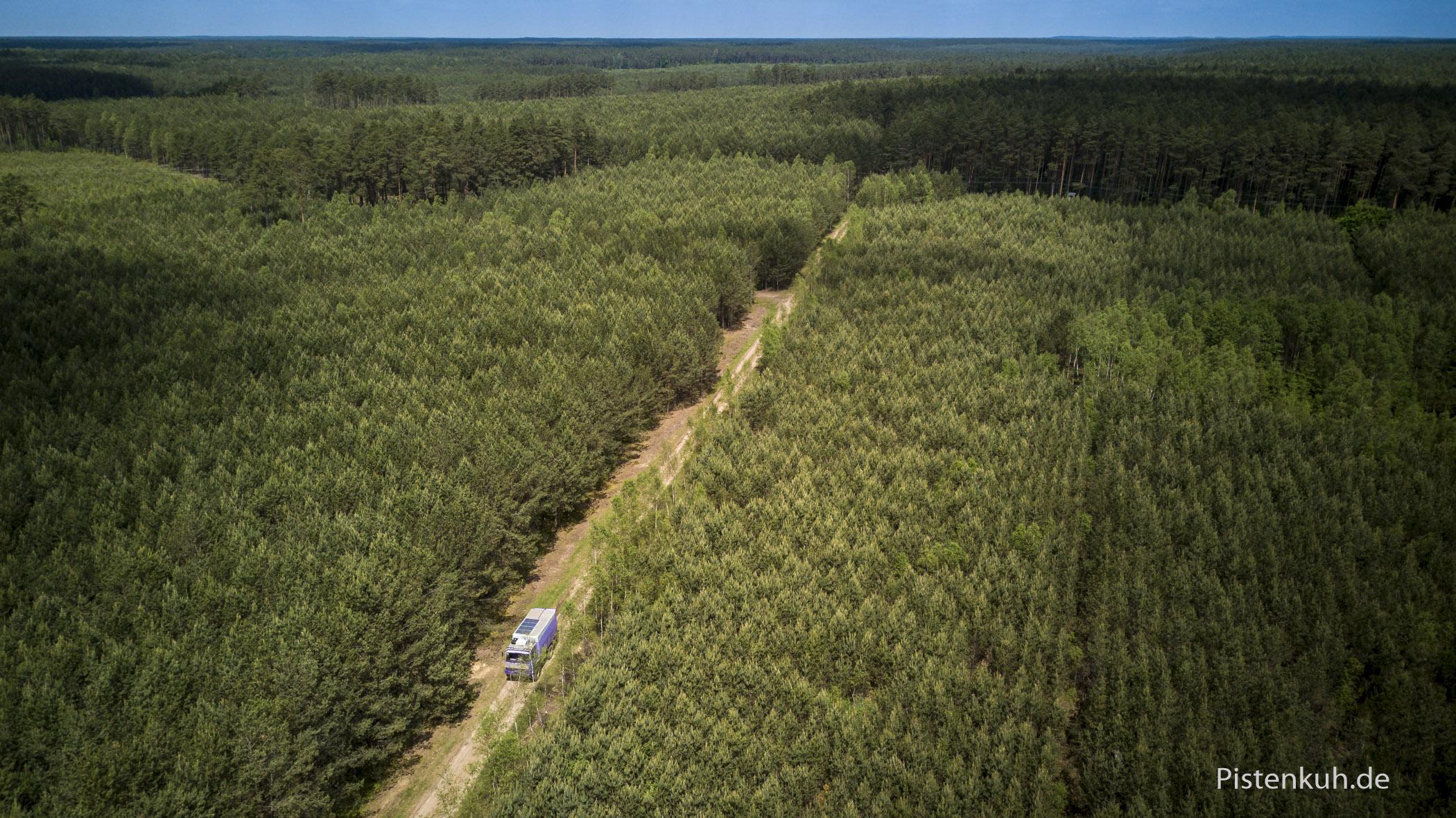 Waldschneise in Polen