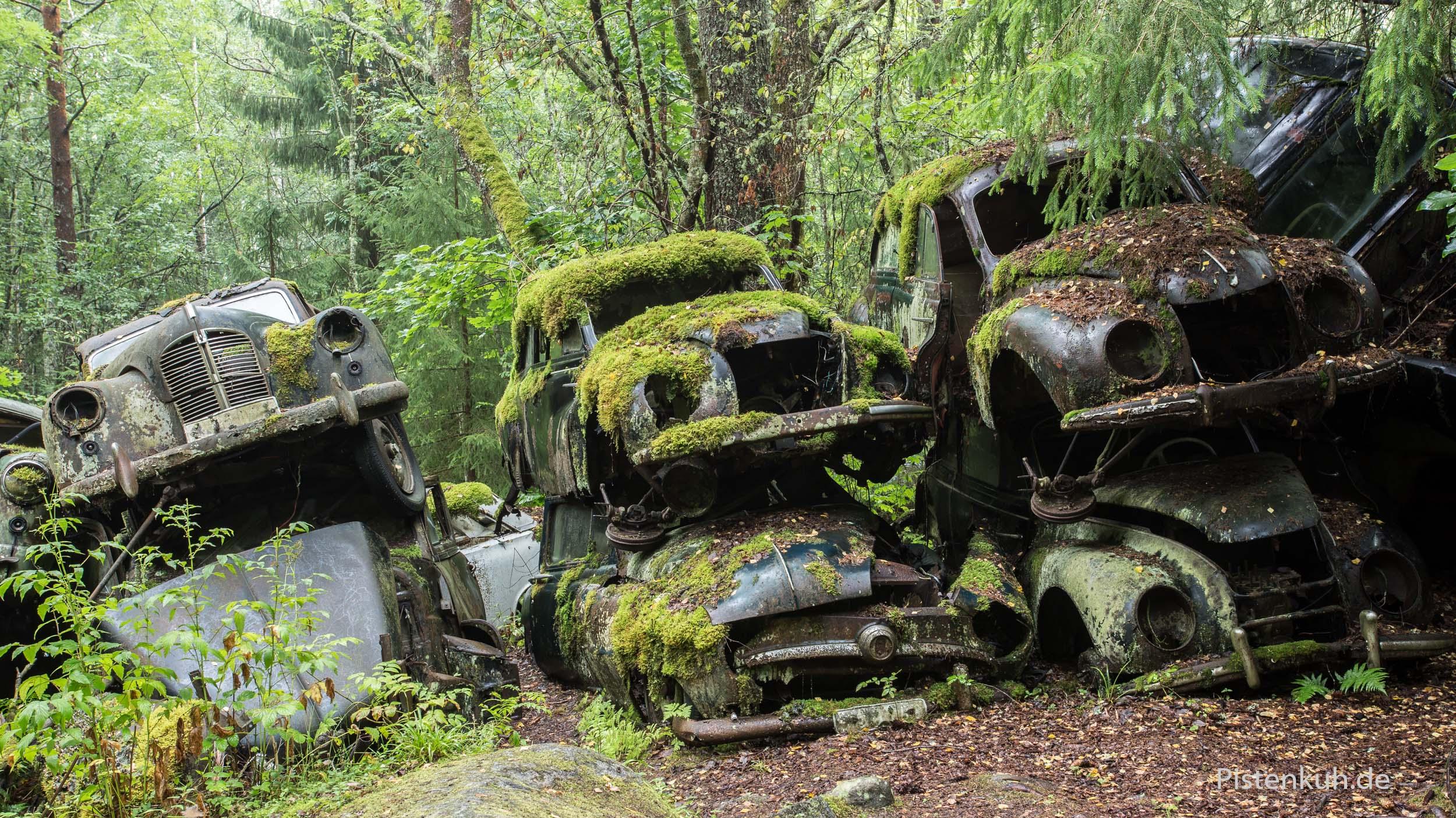 Autowracks im Wald