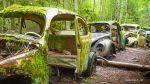 VW-Käfer verrostet und vergessen im Wald