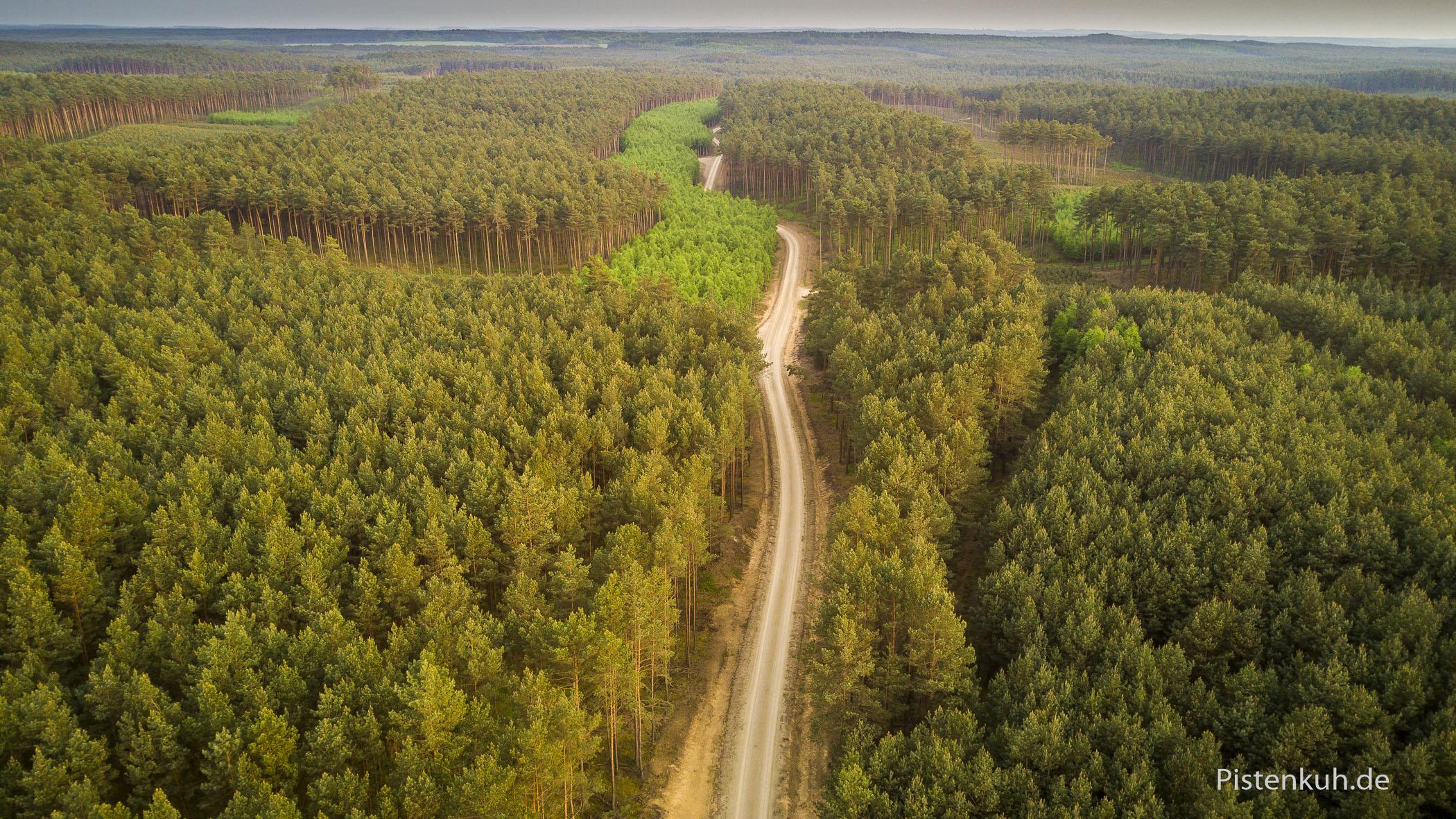 Forstwege ziehen sich endlos durch die polnischen Wälder