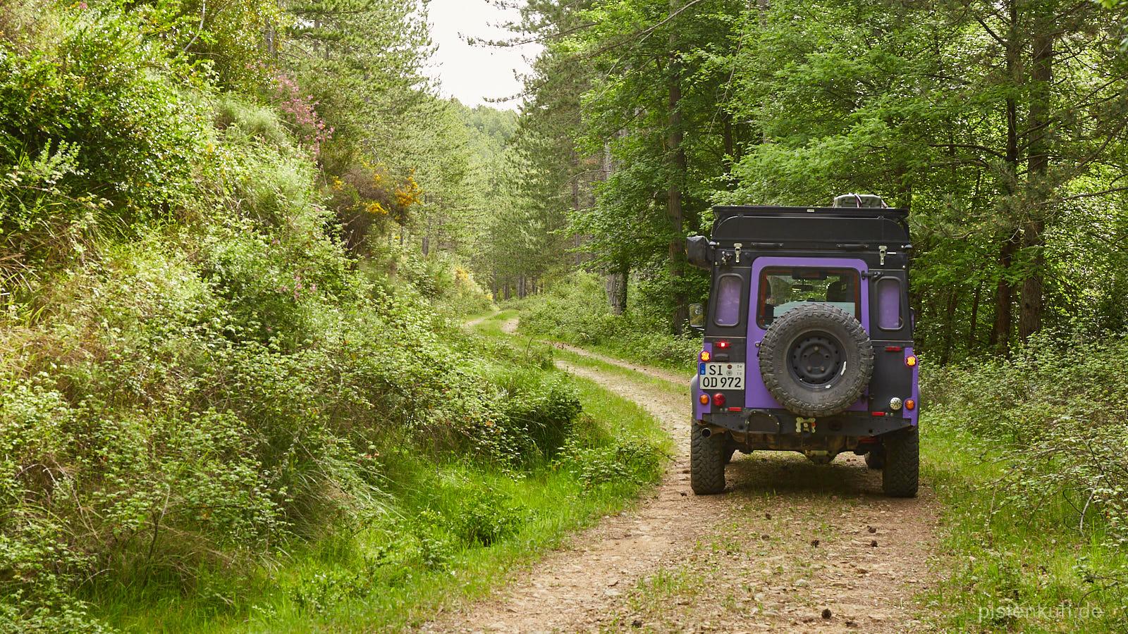 Waldwege in Spanien