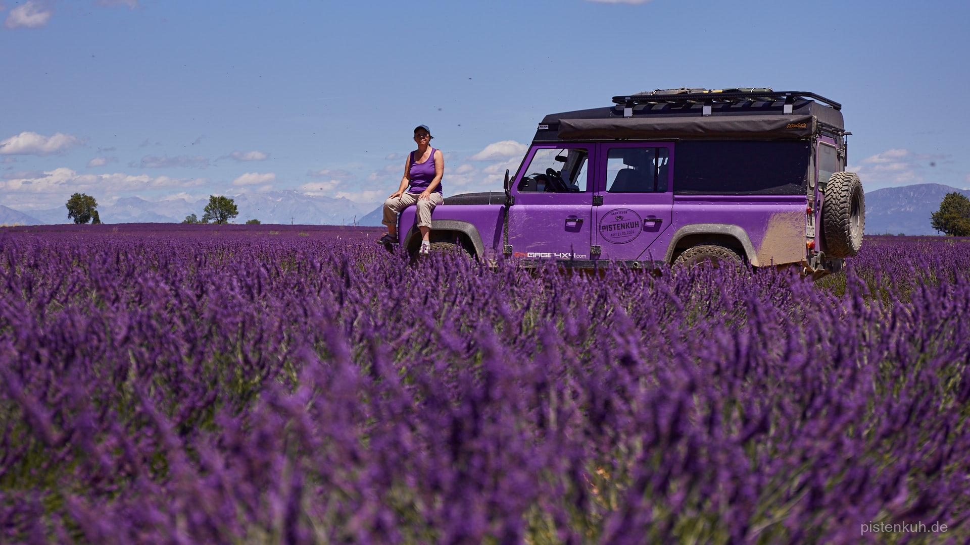 defender im Lavendelfeld